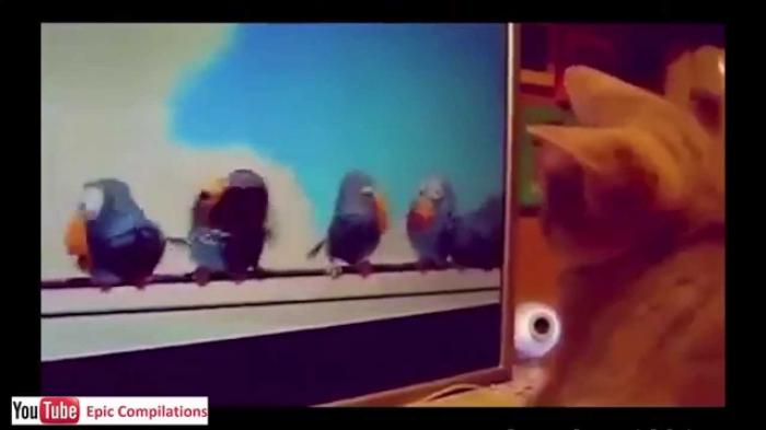 Are These Birds Real? Funny Cats Videos