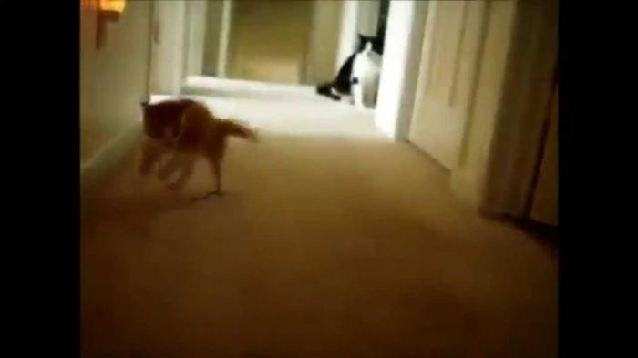 Best Kitten Compilation For March 2015