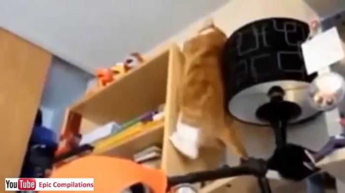Can I Get On The Top Shelf - Best Cats Videos - 2