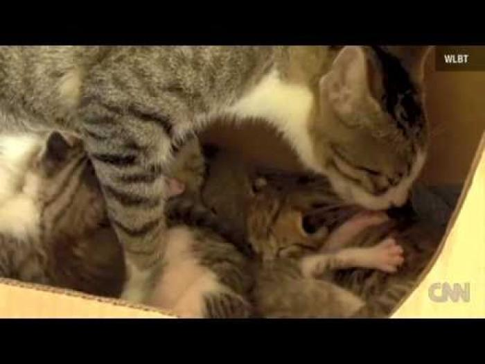 Cat becomes mother of squirrel