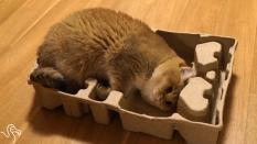 Is your cat also trying to fit in every box?
