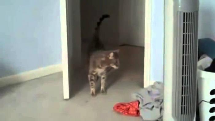 Cat Get Scared
