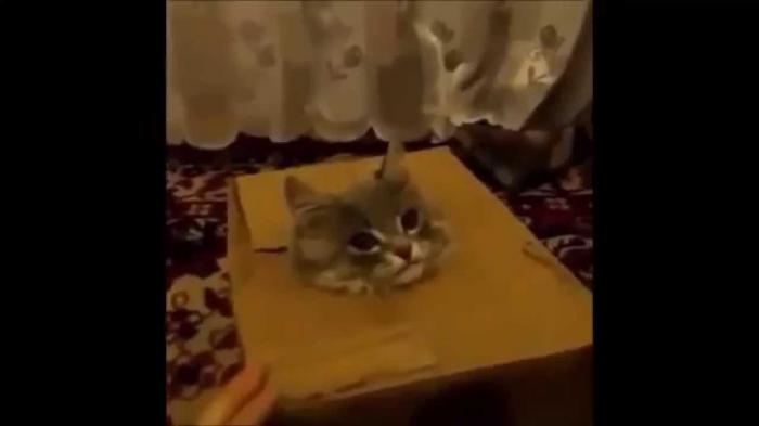 Cat Hiding in The Boxs