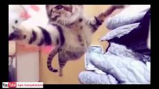 Cat in Jump in Slow Motion as well as cat trying to steal cereals, kitten tickling, cat hiding in the box and much more.