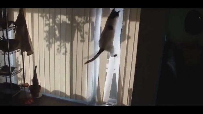 Cat Is Trying To Catch A Bird Behind The Window