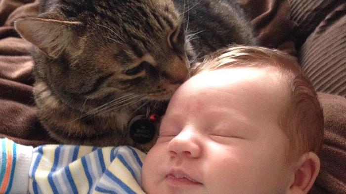 Cat & Kitten Licking Baby Hair
