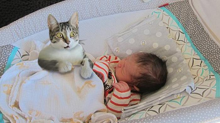 Cat Meeting Newborn Baby First Time - 1