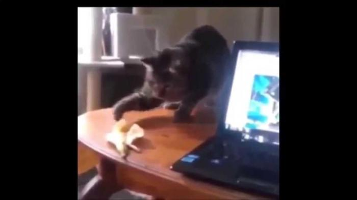 Cat vs Banana