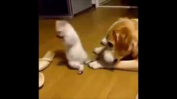 Cat vs Dog - Funny Cat Videos for