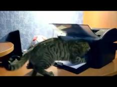 See, what will happen when cat discover printer.
