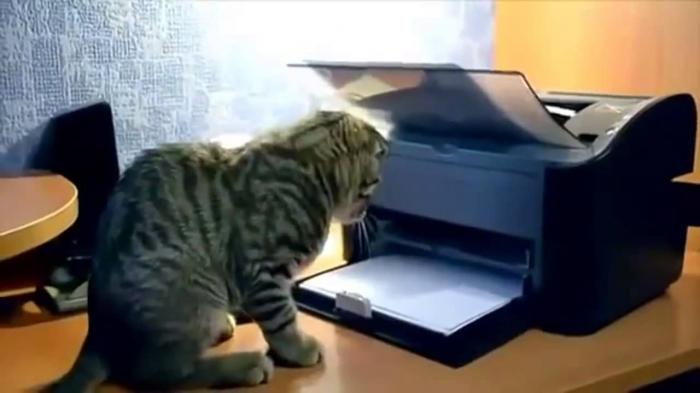 Cat vs Printer and Cat vs Pidgeon