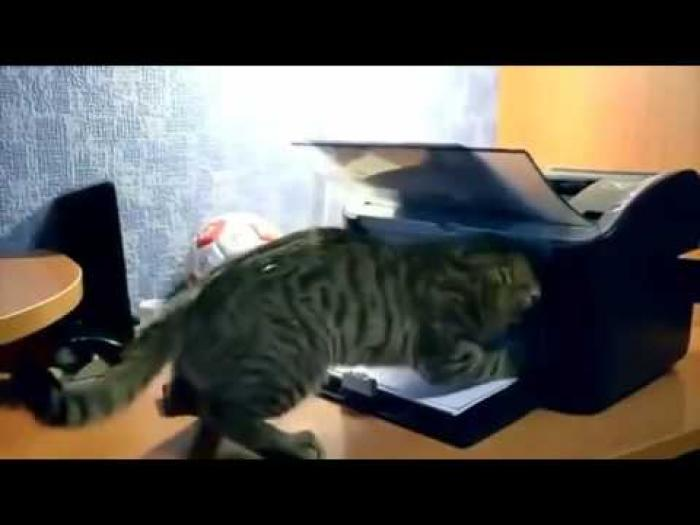 Cat vs Printer