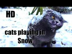 Let's see how funny cats playing in the snow. Cats and kittens jumping and falling in the snow, playing with snowflakes.! Hope you like our compilation.