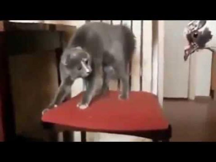 Daily Cat Videos for 11th February 2015