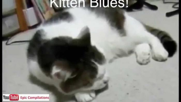 Daily Cat Videos for 13th February 2015 - 02