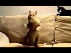 Everybody likes dancing. Cats too!!! How about your cat?