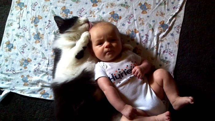 Funny Cat Cleans Baby