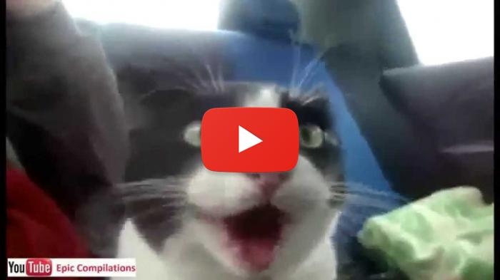 Funny Cat Videos for 14th February 2015 - Funny Cats Videos Funny Videos