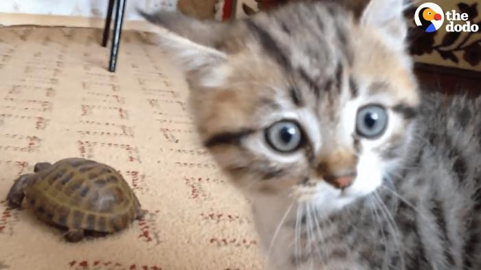 Kitten Doesn't Know How React To Tortoise