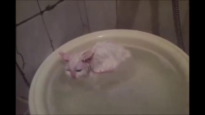 Kitten doesn't want to leave a warm bath