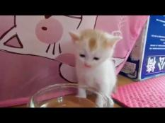 Kitten Drinks Water In The Cutest Way Possible!
