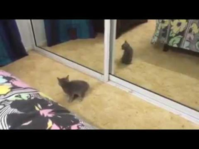 Kitten encounters new enemy who is capable as it is