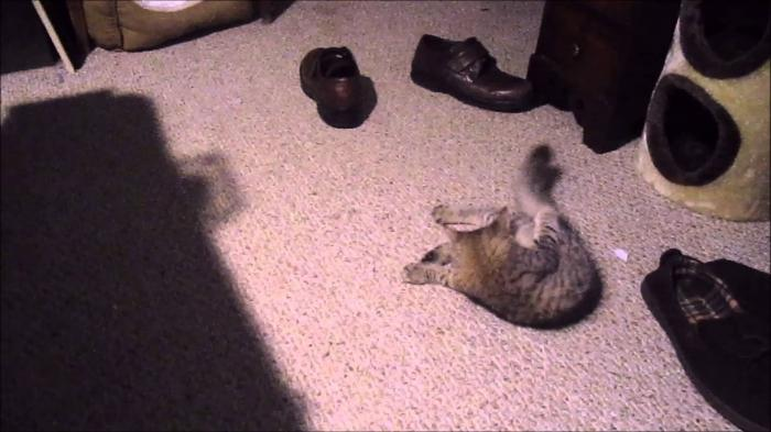 Kitten is hiding objects in shoe