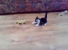 Kitten encounter close to the sofa pack of laser lizards. Check the video to see, what will happen.