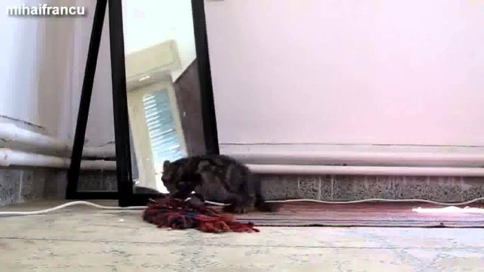 Kitten vs Mirror Image