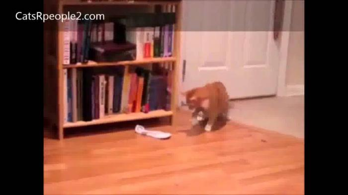 Kitten vs Mysterious Object - Funny Cat Videos Compilation
