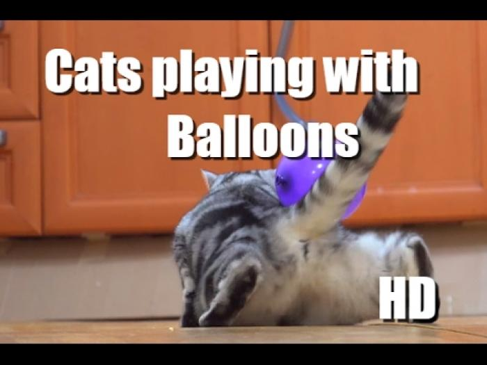 Kittens and balloons