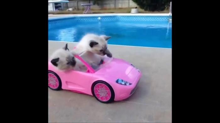 Kittens Can Drive Car