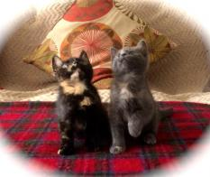 Kittens Shelter Cats Got Talent...two adorable and funny kittens dancing synchronized to Lil Jon's Turn Down for What!