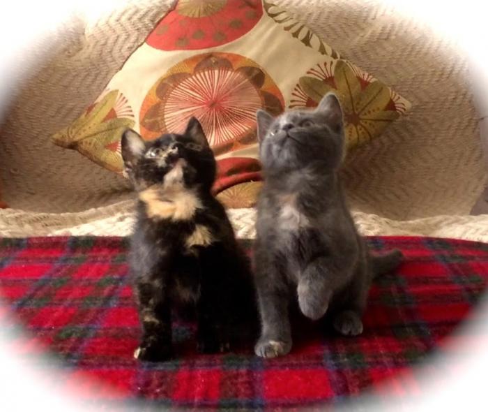 Kittens Synchronized Dancing