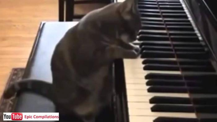 Piano Cat - Funny Cat Videos