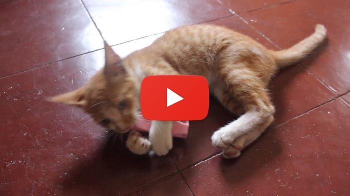 Funny Cat Videos Singing And Dancing