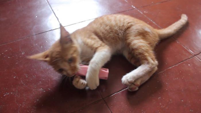 Playful kitten with brush