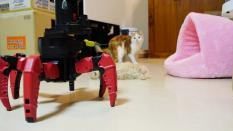 Future is here, even robot wants to play with adorable kittens!!!