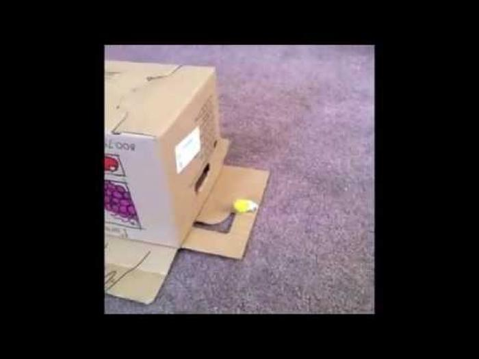 Who Is Hiding Inside The Box Who is hiding inside the box? Watch the video to find out. :)