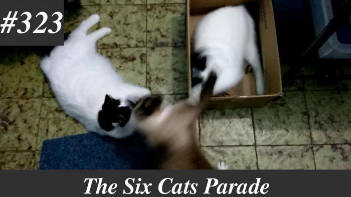 wo cats playing and fighting in a box